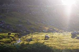 British Landscape Foto: Anne Reimers